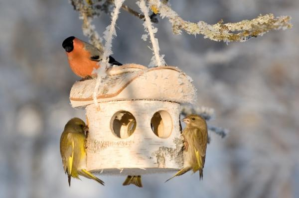 Birch bird feeder - handmade from natural silver birch - FSC certified